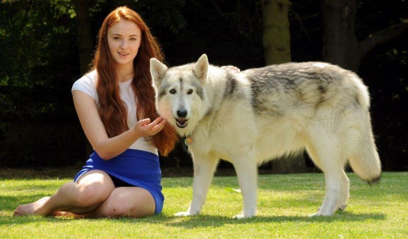 Sophie Turner ve köpeği