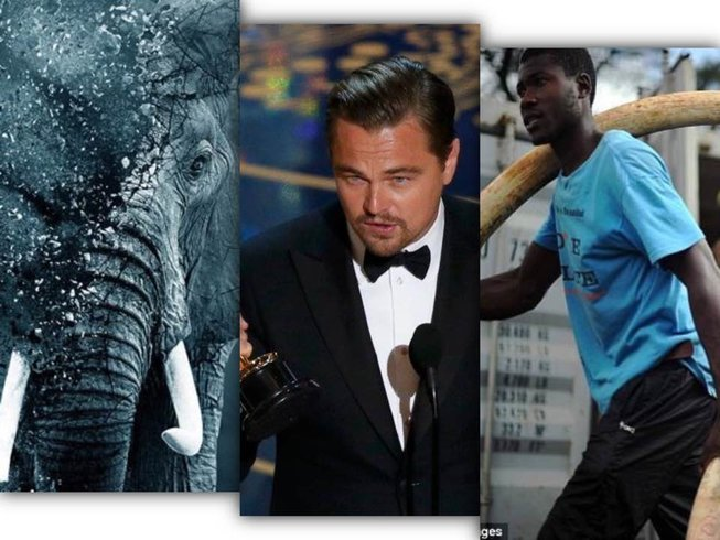 DiCaprio The Ivory Game