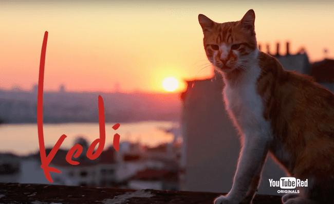 kedi belgesel