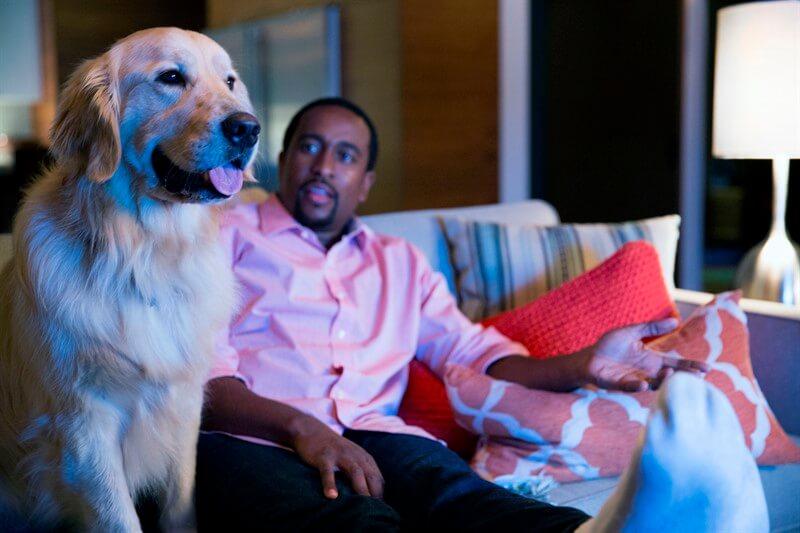 Netflix dizi köpek