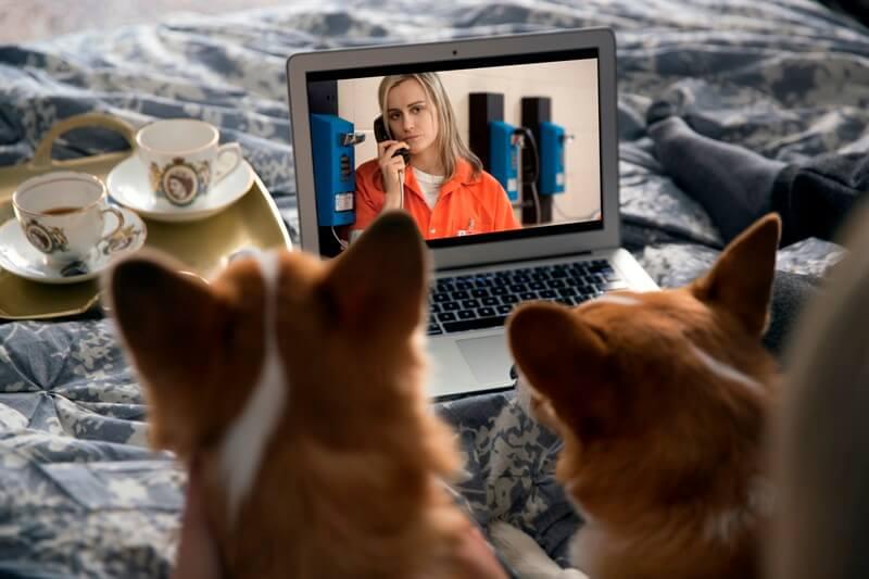 Netflix kedi köpek